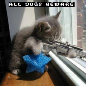 Kitten is shooting Neighbours dog