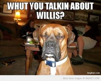 boxer dog meme funny