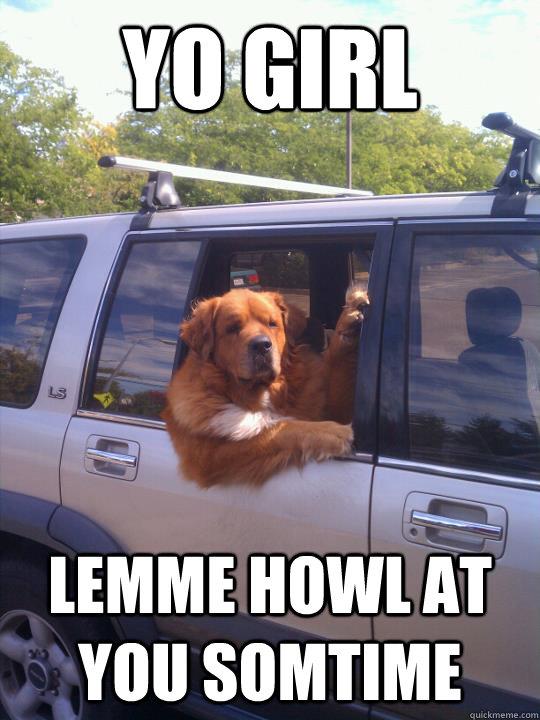 funny street dog