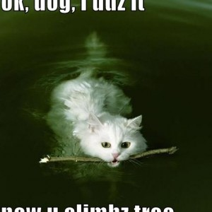 Cats can swim