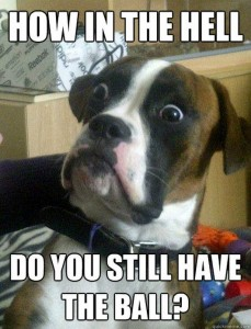 Funny Boxer Dog Picture