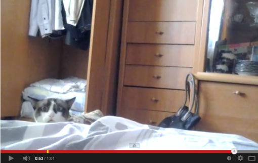 Funny Video with this curious cat peeking over a bed